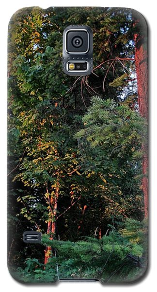 Galaxy S5 Case featuring the photograph The Magic Hour by Natalie Ortiz