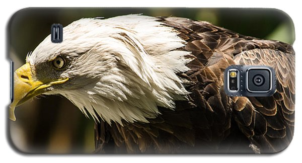 Galaxy S5 Case featuring the photograph The Majestic American Bald Eagle by Yeates Photography