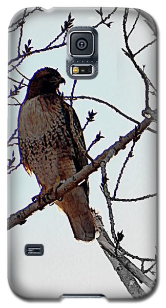 The Majestic Hawk Galaxy S5 Case
