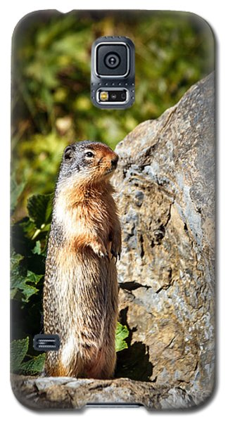 The Marmot Galaxy S5 Case by Robert Bales
