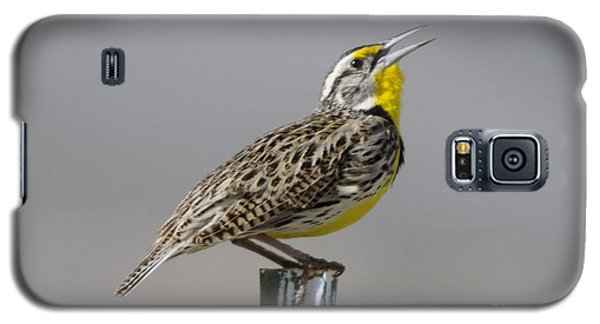 The Meadowlark Sings  Galaxy S5 Case by Jeff Swan