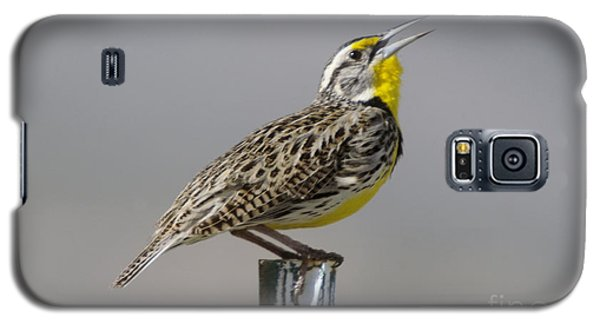 Meadowlark Galaxy S5 Case - The Meadowlark Sings  by Jeff Swan