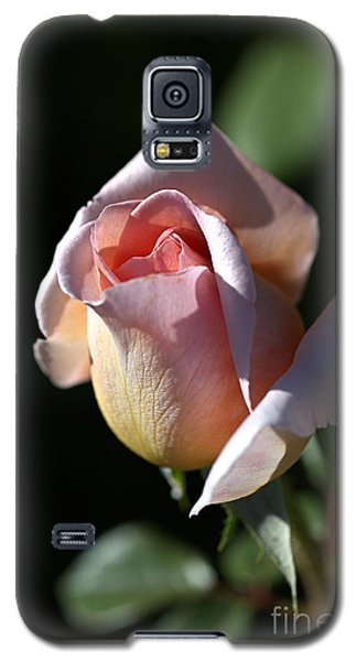 The Morning Pink Rose Galaxy S5 Case