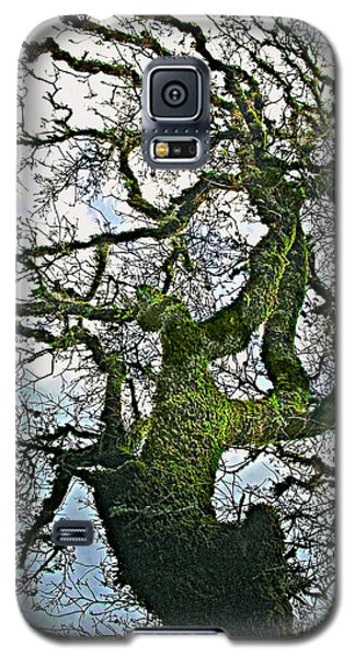 The Old Mossy Oak Tree Against Cloudy Sky Galaxy S5 Case