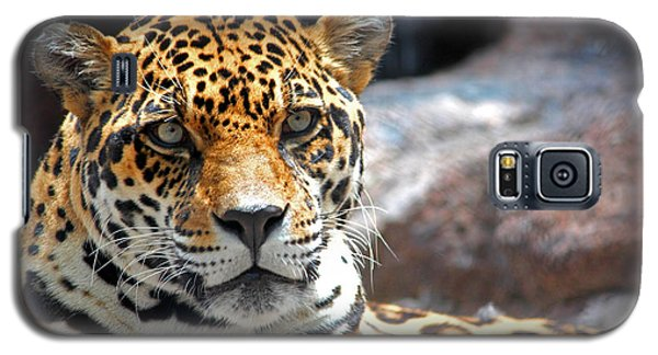 Galaxy S5 Case featuring the photograph The Ole Leopard Don't Change His Spots by Lynn Sprowl
