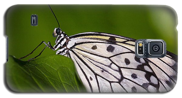 Galaxy S5 Case featuring the photograph The Paper Kite Butterfly by Zoe Ferrie