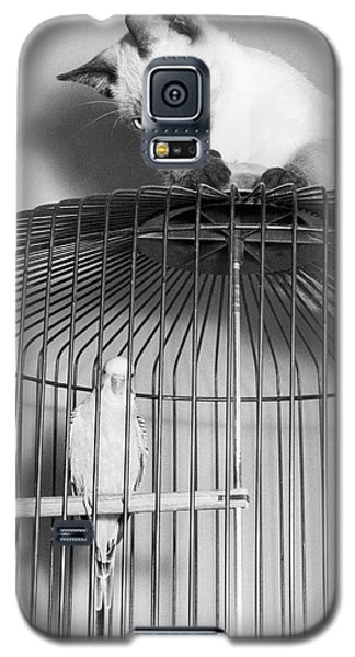 Parakeet Galaxy S5 Case - The Parakeet And The Cat by Underwood Archives