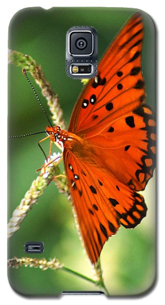 The Passion Butterfly Galaxy S5 Case