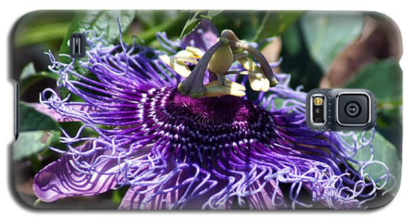 The Passion Flower Galaxy S5 Case by Kim Pate