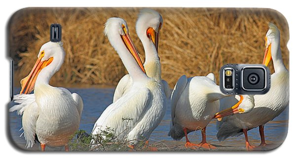 The Pelican Gang Galaxy S5 Case