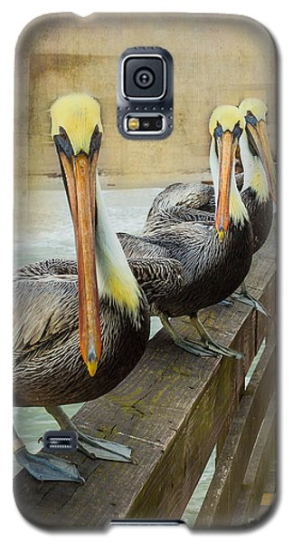 The Pelican Gang Galaxy S5 Case by Steven Reed