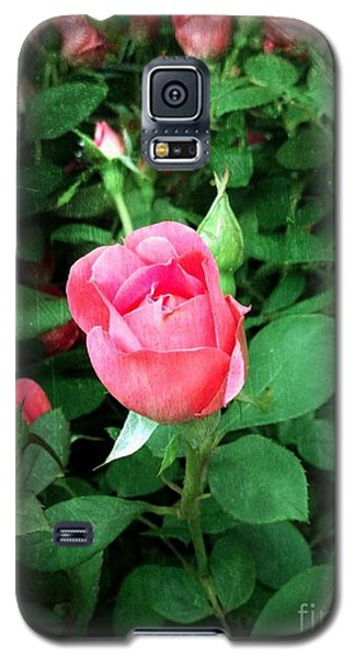 Galaxy S5 Case featuring the photograph The Perfect Pink Rose by Becky Lupe