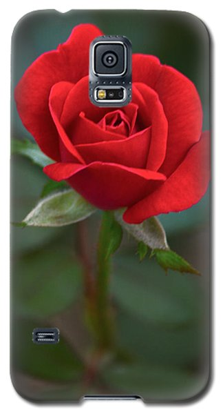 The Perfect Rose Galaxy S5 Case