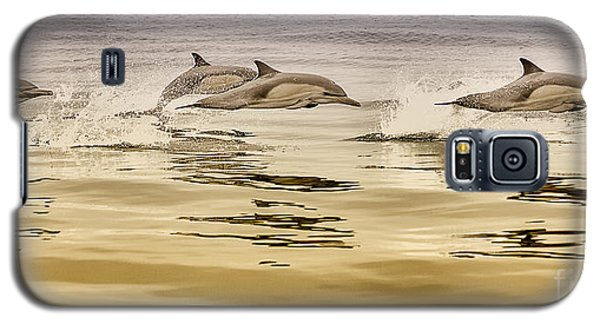 Dolphin Canvas Print, Photographic Print, Art Print, Framed Print, Greeting Card, Iphone Case, Galaxy S5 Case