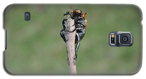 Galaxy S5 Case featuring the photograph The Posing Beetle by Verana Stark