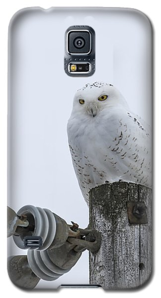 The Power Of The Owl Galaxy S5 Case