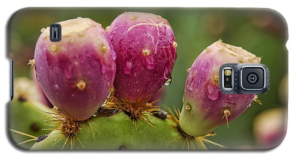 The Prickly Pear  Galaxy S5 Case