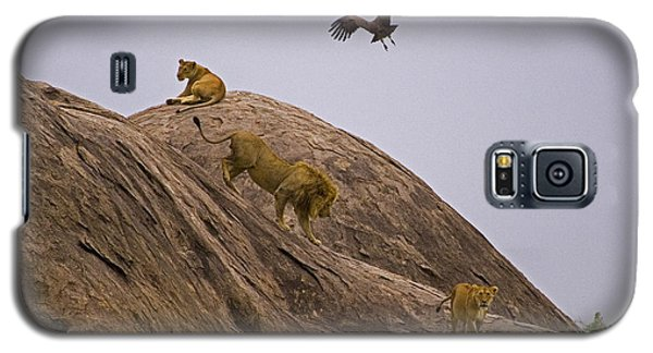 Galaxy S5 Case featuring the photograph The Pride by J L Woody Wooden