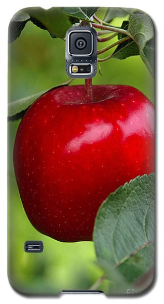 The Red Apple Galaxy S5 Case