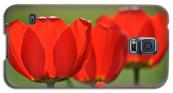 The Red Tulips Galaxy S5 Case
