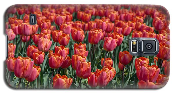 Galaxy S5 Case featuring the photograph The Red Tulips by Sergey Simanovsky
