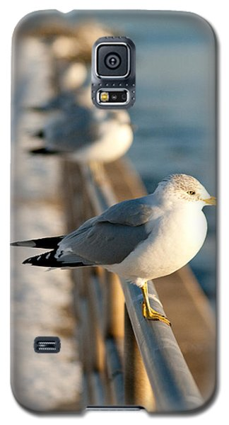 The Ring-billed Gull Galaxy S5 Case