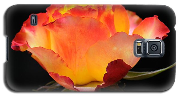 Galaxy S5 Case featuring the photograph The Rose by Vivian Christopher