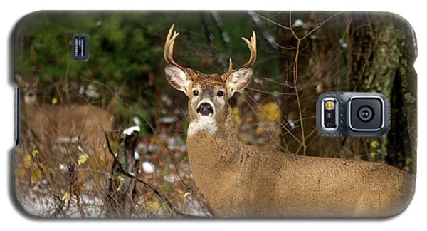 The Rutting Whitetail Buck Galaxy S5 Case