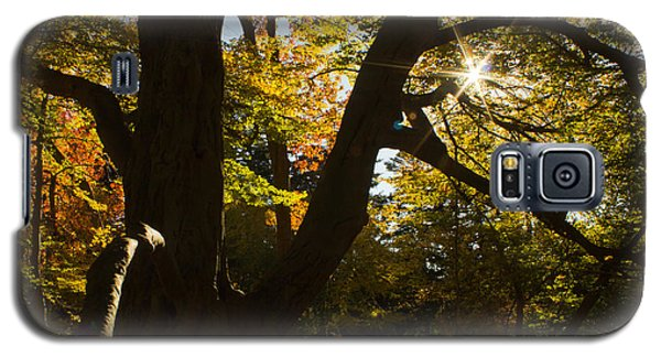 Galaxy S5 Case featuring the photograph The Secret Forest by Jose Oquendo