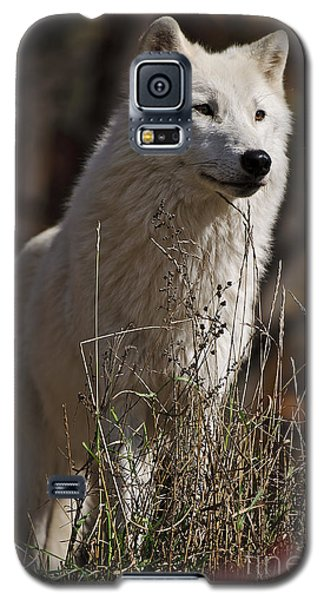 Galaxy S5 Case featuring the photograph The Sentinel by Wolves Only