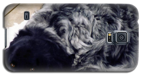 The Shaggy Dog Named Shaddy Galaxy S5 Case