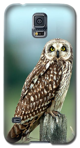 The Short-eared Owl  Galaxy S5 Case
