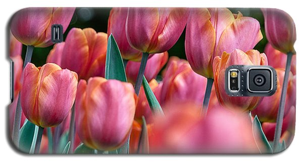 Galaxy S5 Case featuring the photograph The Spring Flowers by Sergey Simanovsky