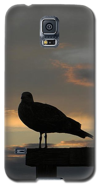 The Sunset Perch Galaxy S5 Case by Jean Goodwin Brooks