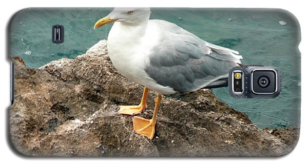 The Thinker - Seagull Photography By Giada Rossi Galaxy S5 Case by Giada Rossi