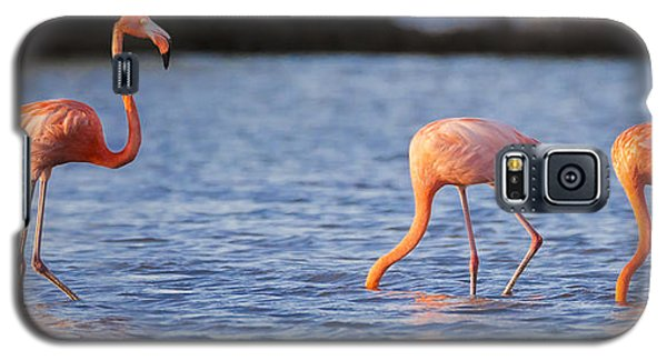 Flamingo Galaxy S5 Case - The Three Flamingos by Adam Romanowicz