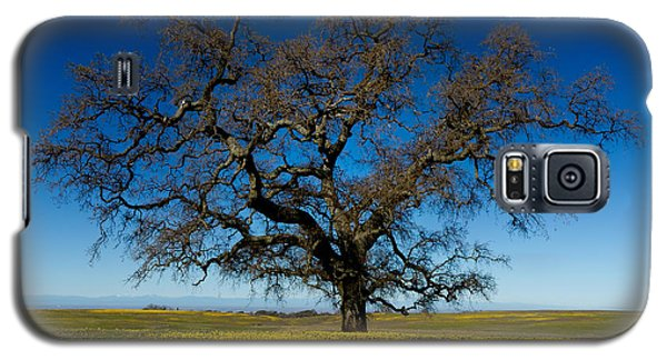 The Tree On Table Mountain Galaxy S5 Case