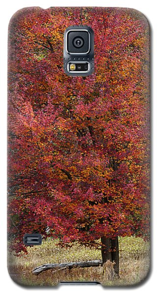 Galaxy S5 Case featuring the photograph The Tree by Timothy McIntyre