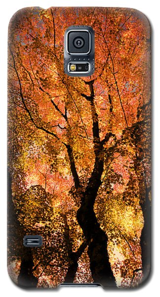 The Trees Dance As The Sun Smiles Galaxy S5 Case by Don Schwartz