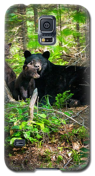 The Ultimate Single Mother Black Bear Sow And Cubs Galaxy S5 Case