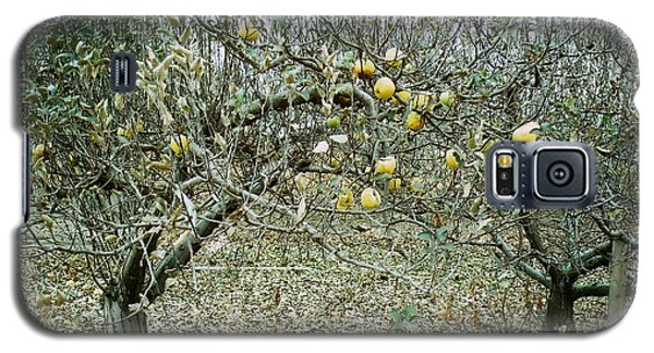 Galaxy S5 Case featuring the photograph The Very Last Apples by Joyce Gebauer