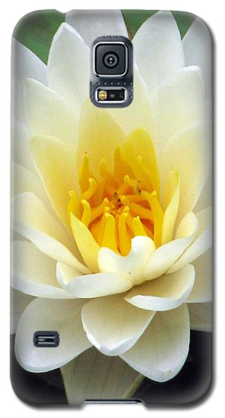 Galaxy S5 Case featuring the photograph The Water Lilies Collection - 03 by Pamela Critchlow