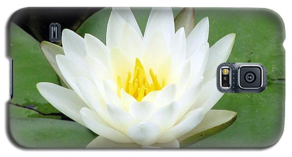 Galaxy S5 Case featuring the photograph The Water Lilies Collection - 04 by Pamela Critchlow
