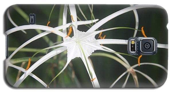 The White Spyder Galaxy S5 Case