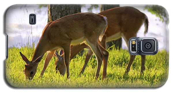 The Whitetail Deer Of Mt. Nebo - Arkansas Galaxy S5 Case
