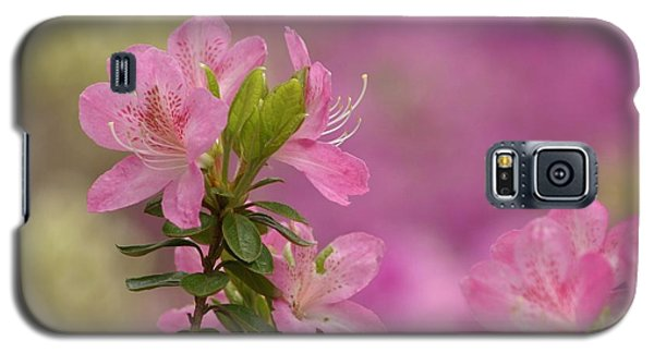Then Spring Arrived Galaxy S5 Case by Living Color Photography Lorraine Lynch