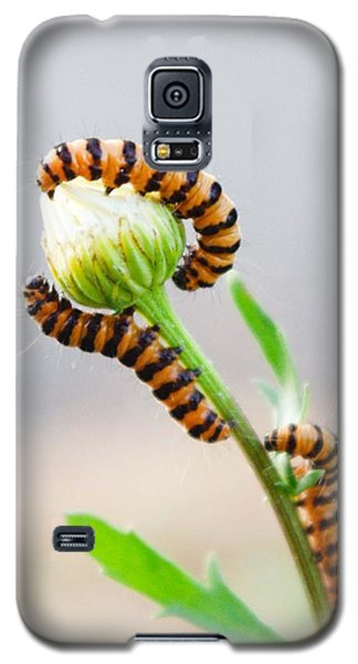 Galaxy S5 Case featuring the photograph There Used To Be A Garden by Adria Trail