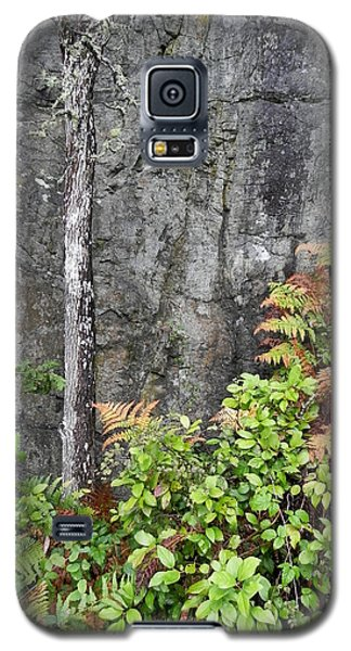 Galaxy S5 Case featuring the photograph Thetis In Fall by Cheryl Hoyle