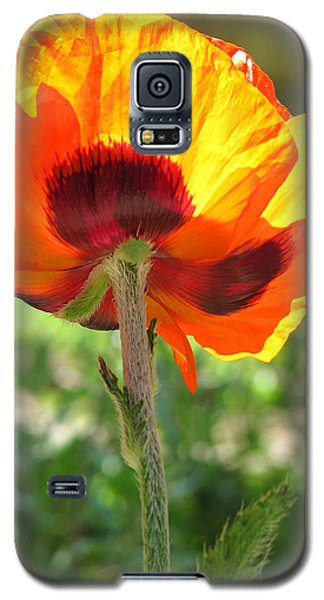 Galaxy S5 Case featuring the photograph Things Are Looking Up by Brooks Garten Hauschild