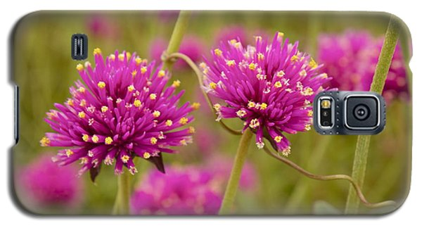 Galaxy S5 Case featuring the photograph Tangled Up In Pink by Alice Mainville